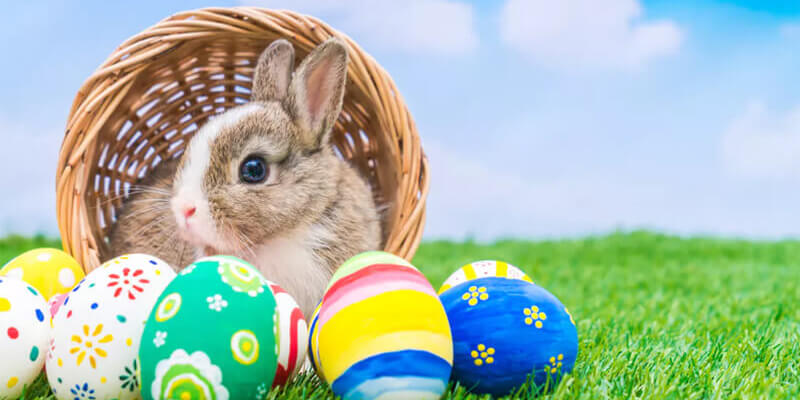 Easter Puns for Instagram
